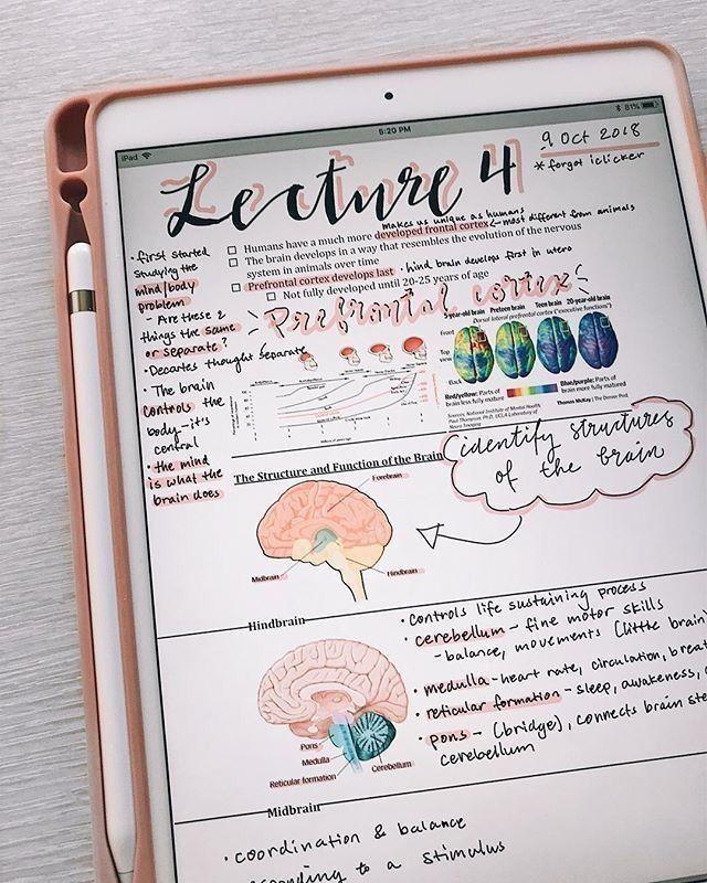 Pinterest Maebelbelle School Study Tips Study Notes School Organization Notes