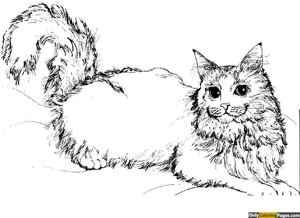 Realistic Kitten Coloring Pages Cat Coloring Page Animal Coloring Pages Coloring Pages