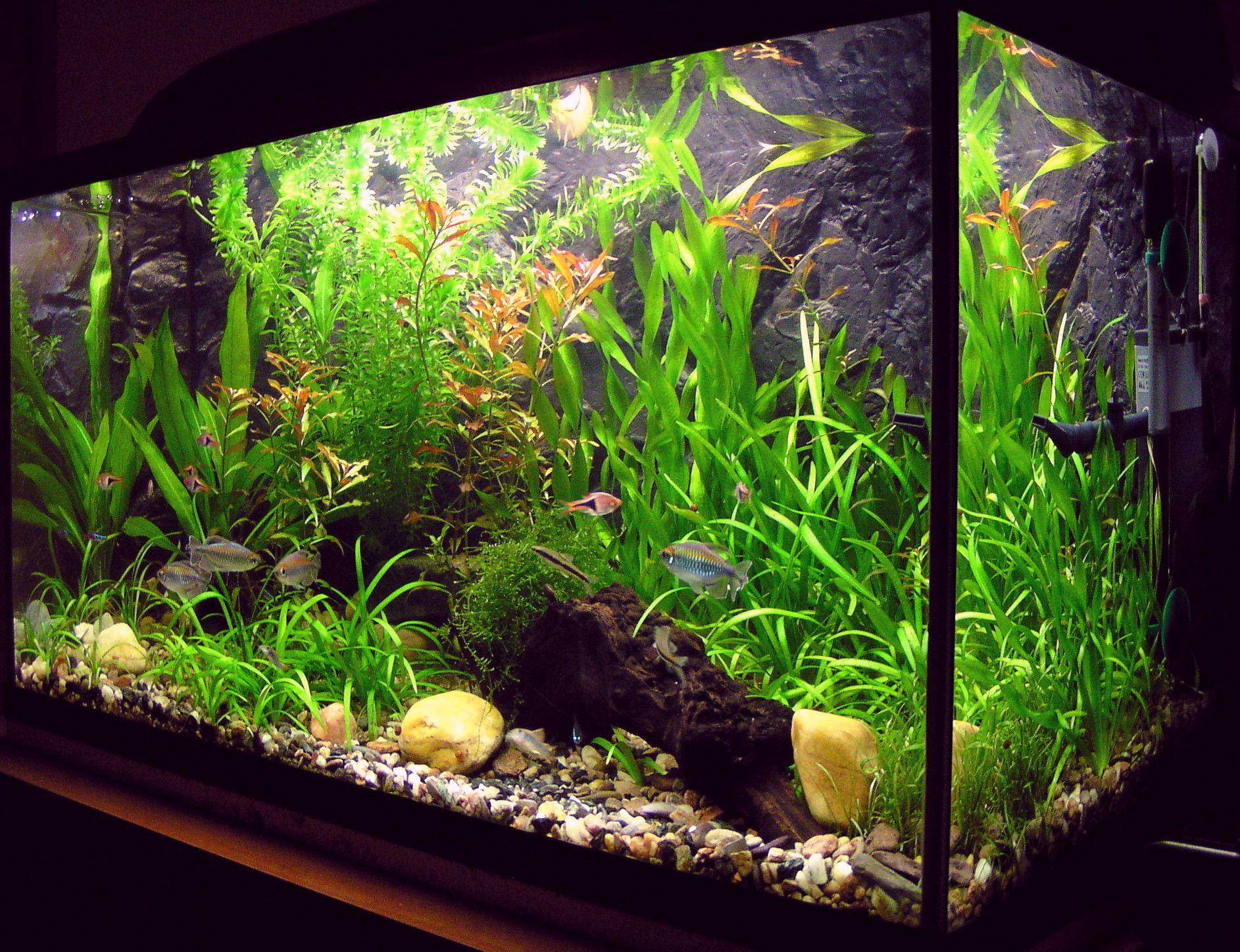 Small aquarium fish tanks - How To Set Up A Freshwater Aquarium Tanked Aquariumsfish