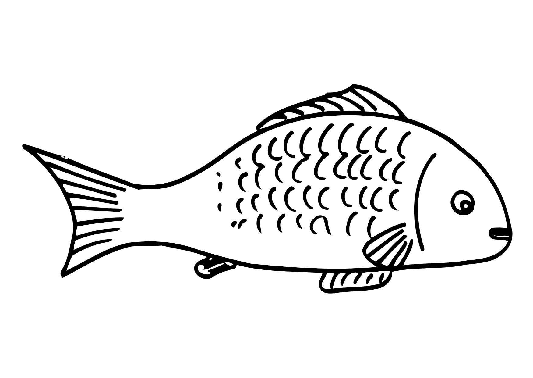 Klplaat Vis Afb 12301 Kleurplaten Vis Bedankjes