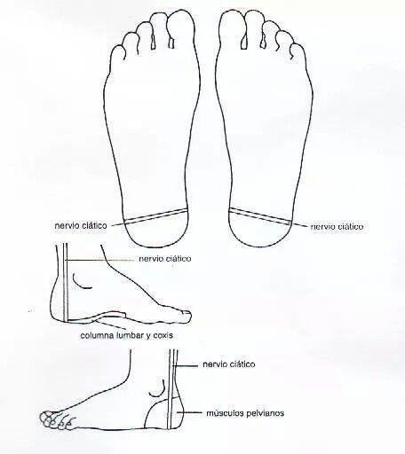 Nervio ciatico reflexologia