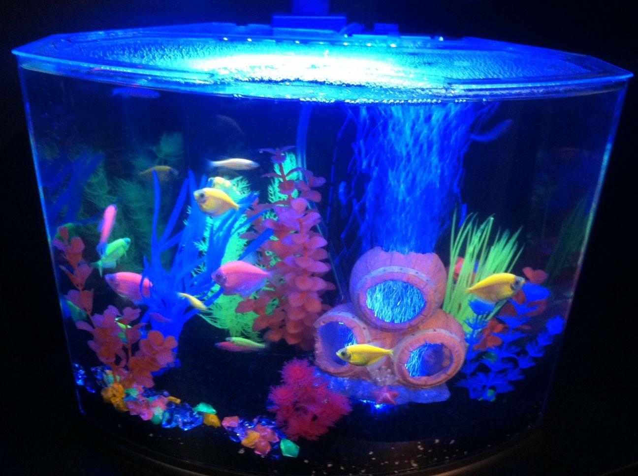 Loving The Glo Effect Glofish Tetrafish Aquariums Fish
