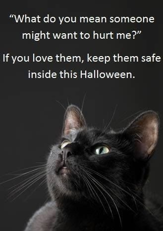 Why You Should Keep Your Black Cat Inside Around Halloween It S Good To Keep All Cats Inside All The Time A Halloween Animals Halloween Pet Safety Black Cat