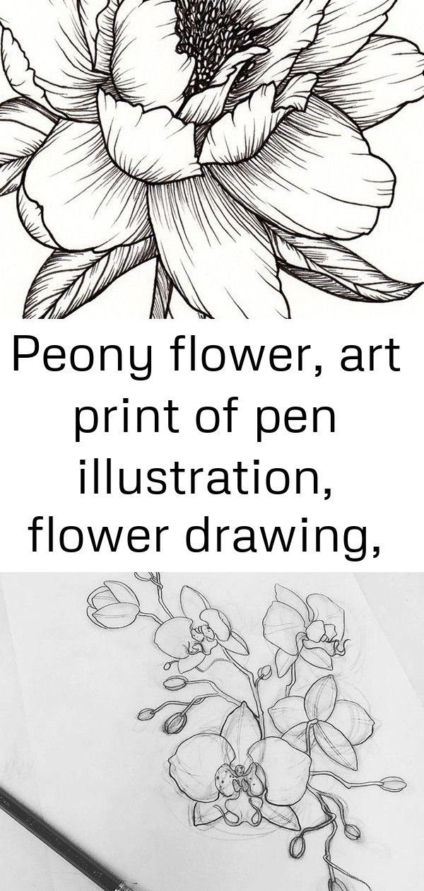Peony flower art print of pen illustration flower drawing floral tattoo botanical line drawin 26 Peony Flower Art PRINT of Pen Illustration Flower Drawing  Etsy Flash she...