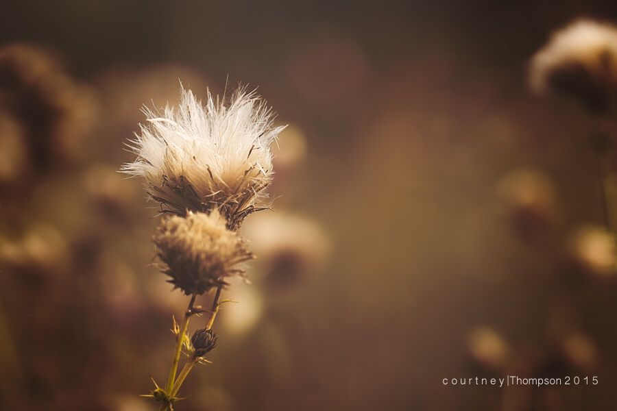 Macro/fall tones- Courtney Thompson Photography