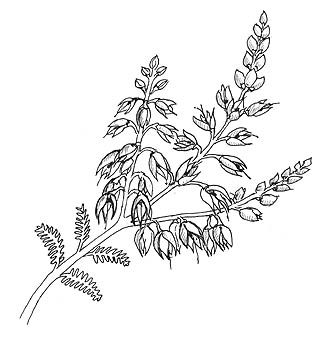 Calluna Heather Flower Stem To Embroider Heather Flower Flower Drawing Plant Tattoo