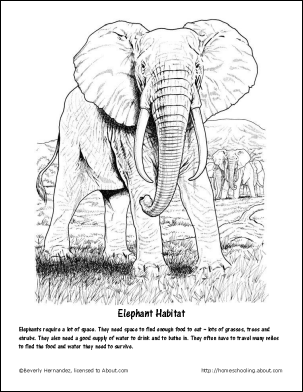 Fun Facts And Printables About Elephants And Elephant Babies Elephant Coloring Page Elephant Drawing Animal Coloring Books
