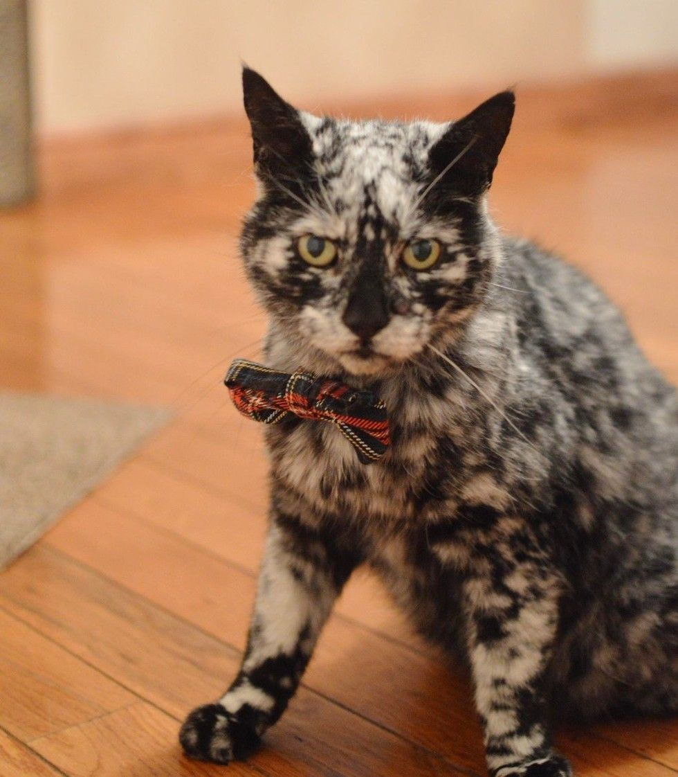 19 Year Old Cat Grows Snowflake Pattern from His Dark