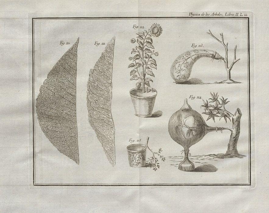 Physica de los arboles en la qual se trata de la Anatomía de las ...