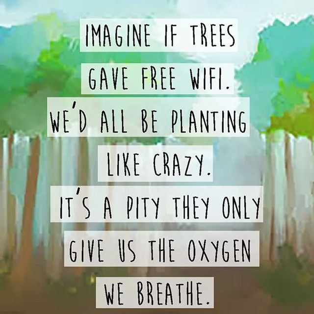What if the trees will disappear in our lifetime? What would be our next step now?  #trees #forest #climatereality #climatechange #environment #globalwarming #globalfever #nature #natural #naturalhabitat #carefornature #plant #ermzteo #livetoinspire #greenpeace #motherearth #onehome #oneplanet #earthday #earthhour