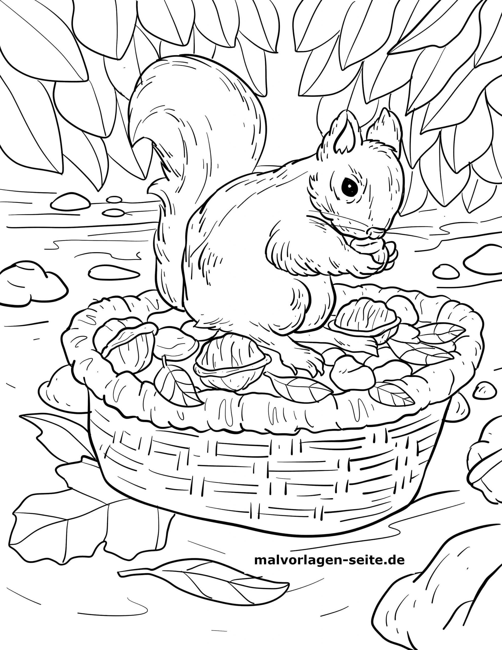 Herbst Malvorlagen Eichhörnchen   Ausmalbilder, Kostenlose ...