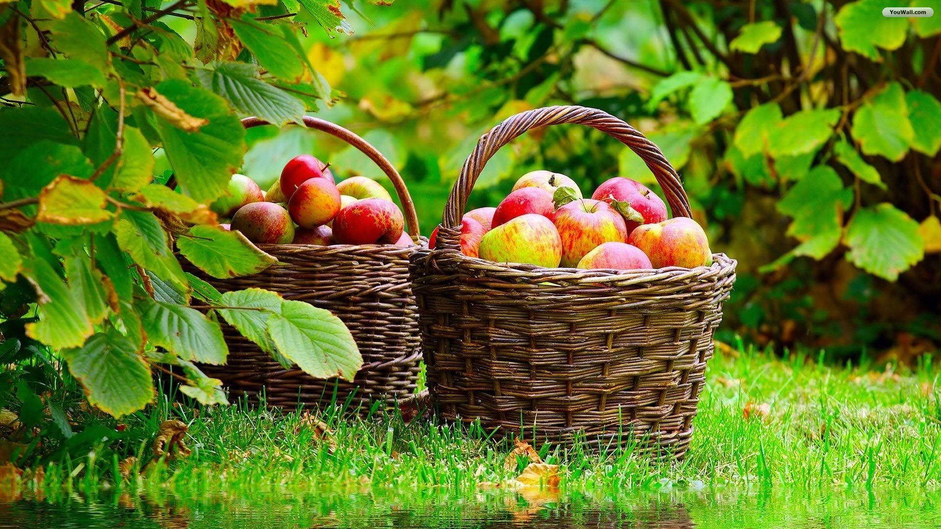Youwall apples basket wallpaper wallpaperwallpapersfree wallpapers
