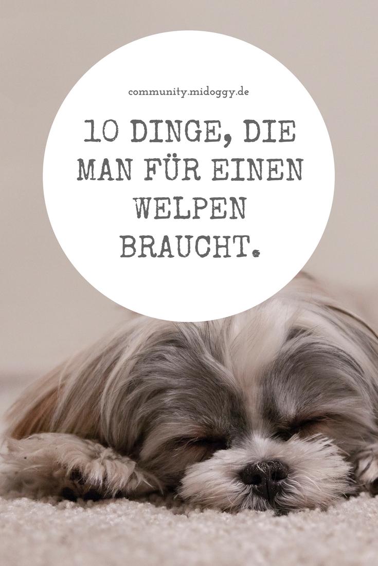 Pin Auf Dog