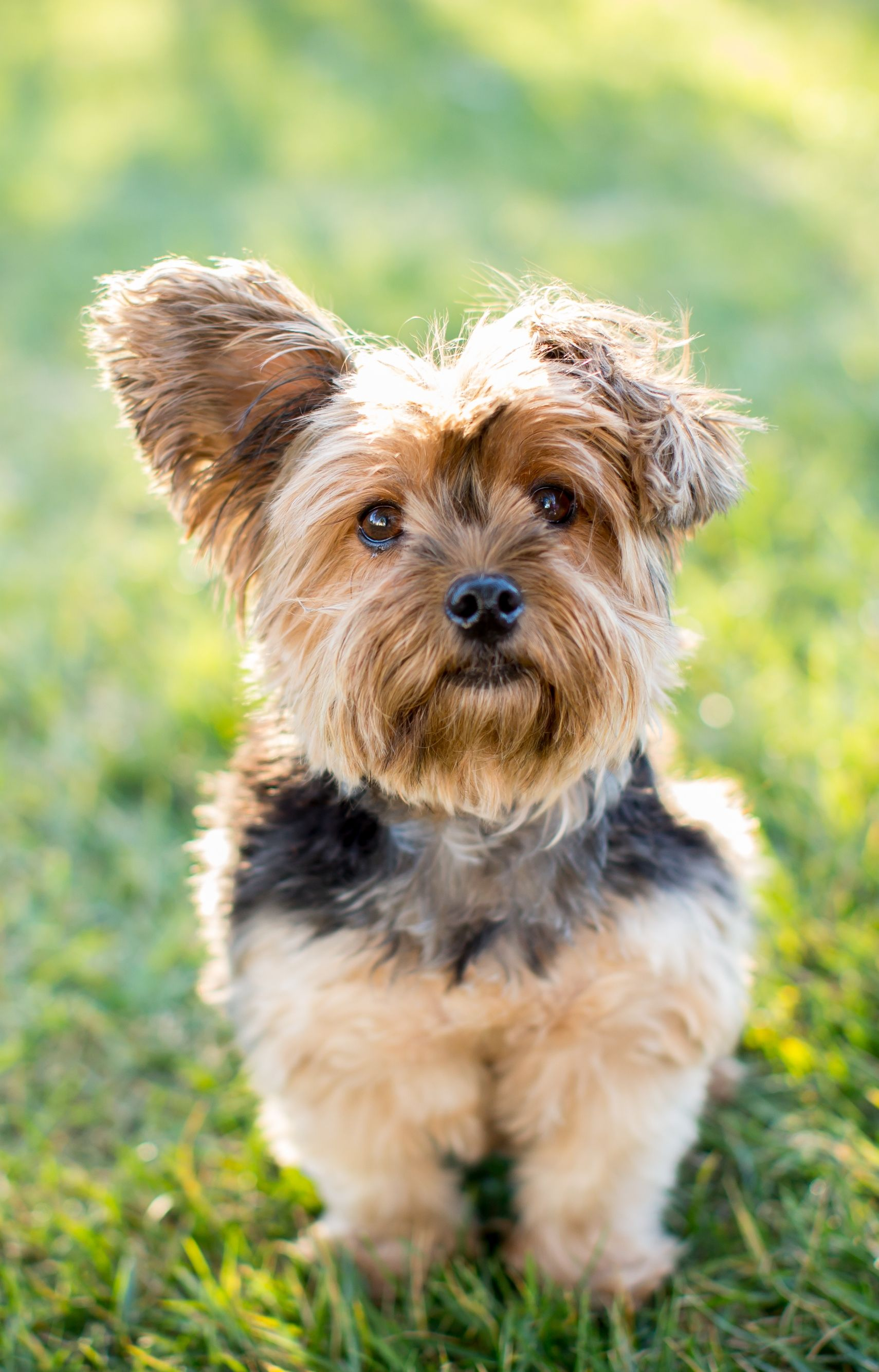 You Need To Consider This Before Installing An Electric Fence Toy Dog Breeds Dog Breeds Dog Toys