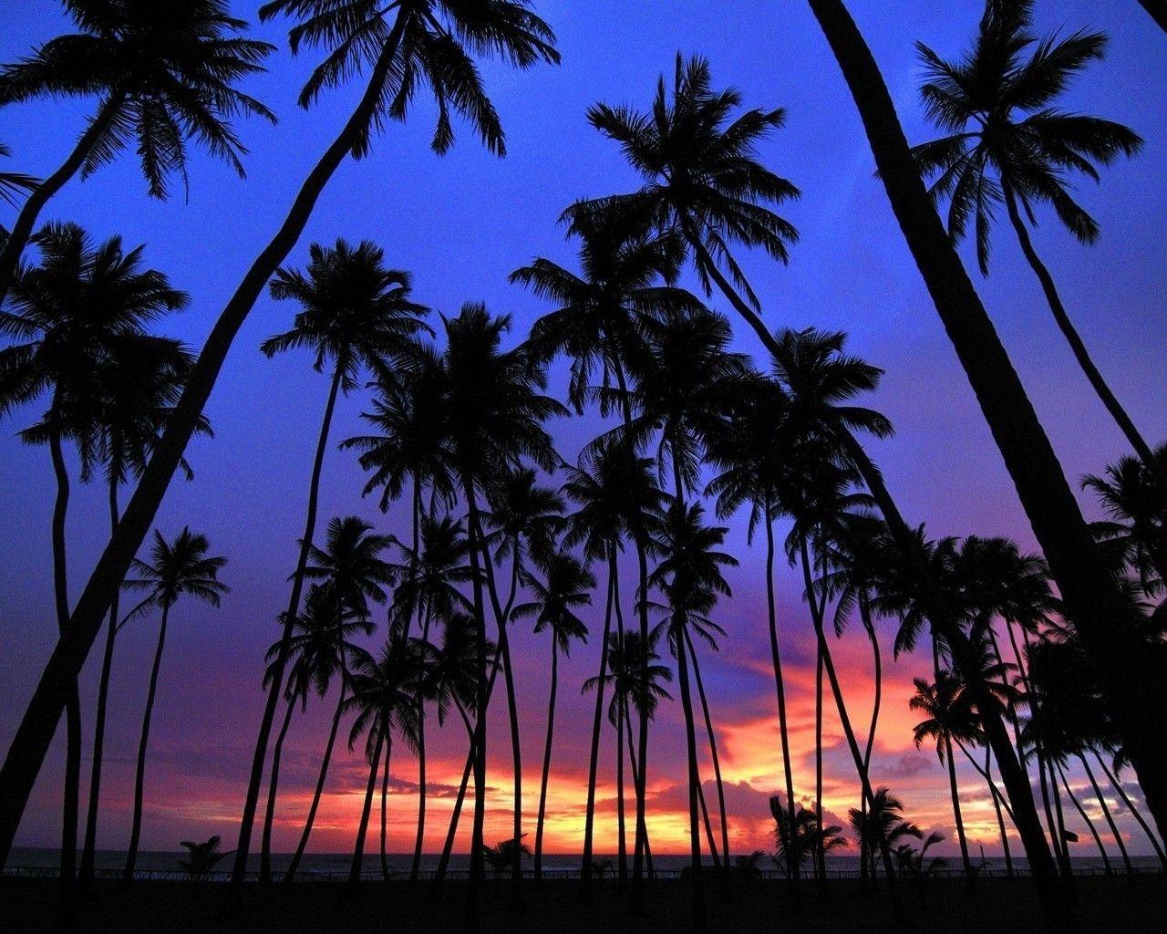 Sri Lanka Landscapes Nature Palm Trees Silhouettes 1280x1024