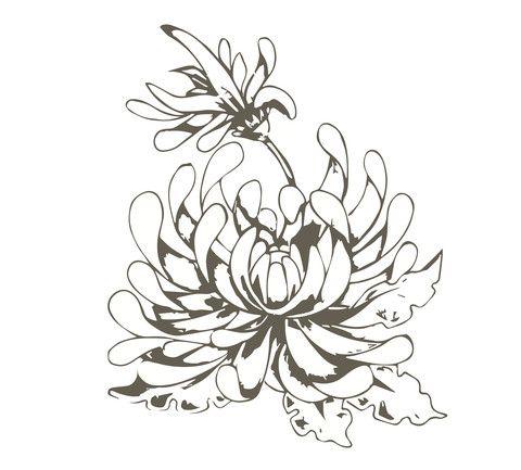 Simple Chrysanthemum Drawing Google Search Chrysanthemum Painting Chrysanthemum Drawing Chrysanthemum