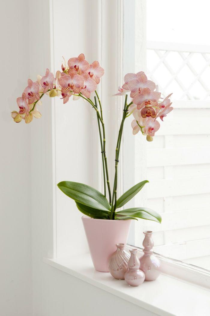 Orchidee Pflegehinweise Und Nutzliche Infos Uber Die Konigin Der
