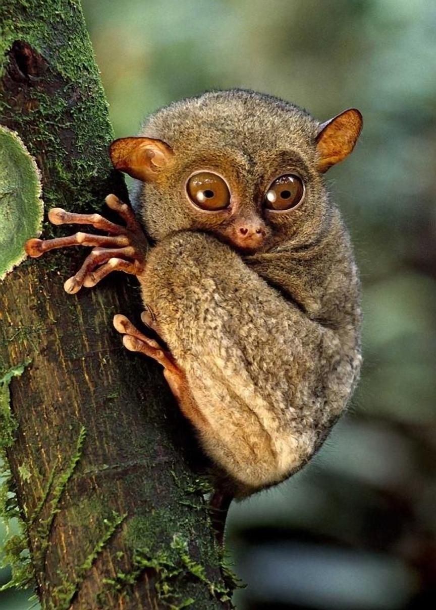 It S Bush Baby Awareness Day Ok I Just Made That Up In Order