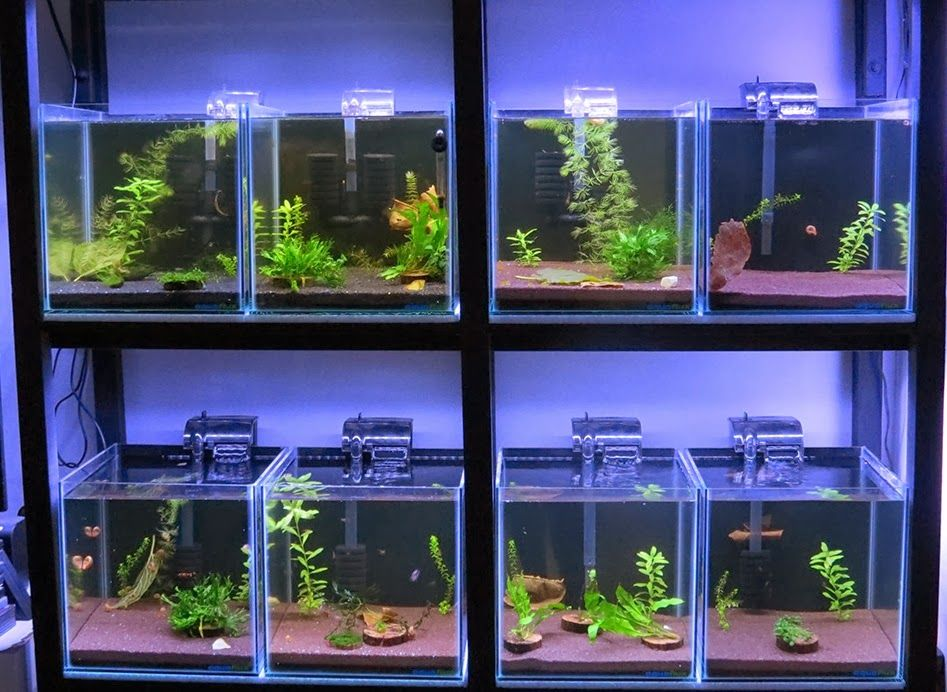 All About Betta Fish Partitioned Betta Fish Tank Setup Betta Aquarium Betta Fish Tank Betta Fish