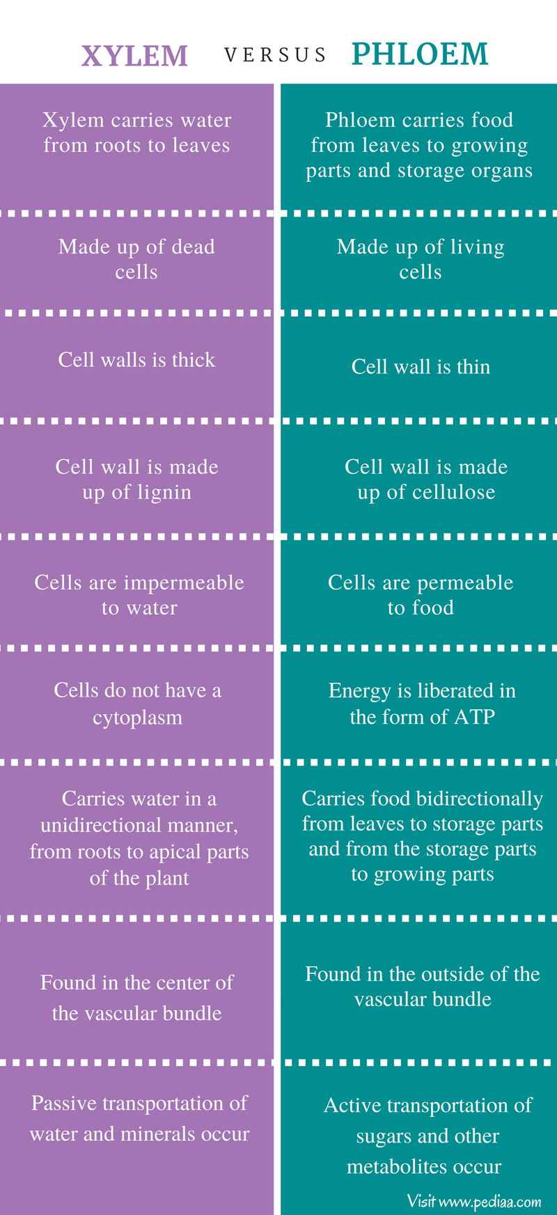 Difference Between Xylem and Phloem - Comparison Summary ...