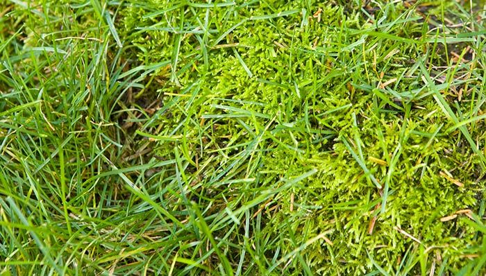 How To Get Rid Of Winter Grass In Bermudagrass