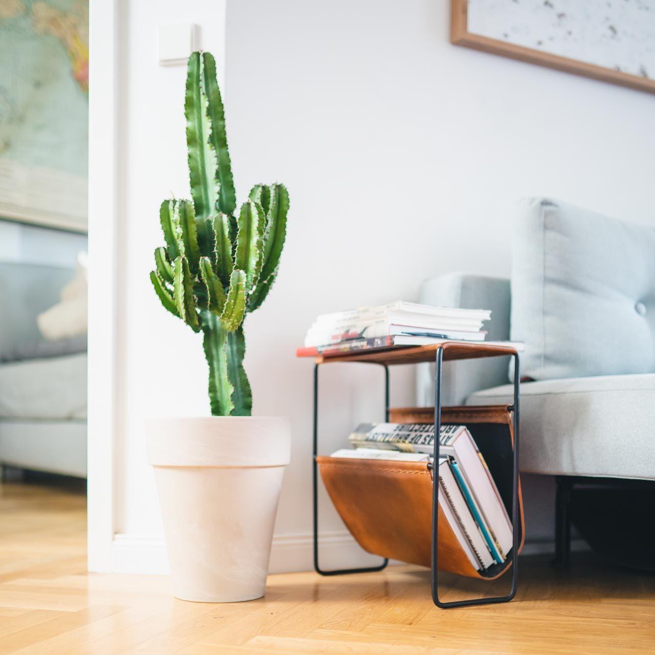 Mein Grosser Gruner Kaktus In 2020 Zuhause Zimmerpflanzen Pflanzen