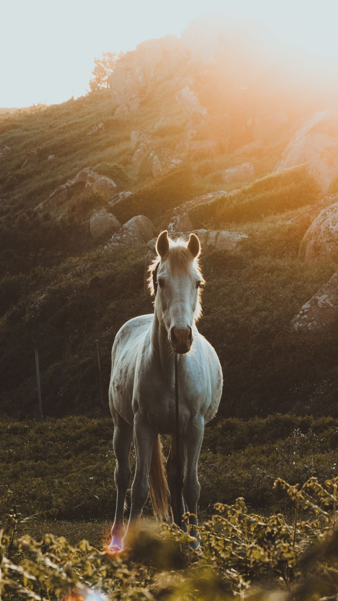 White Horse Grass Landscape Outdoor 1080x1920 Wallpaper Horse Wallpaper Horses Cute Horses