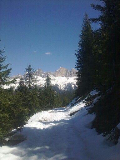 Latemar #wild #wood #mountain