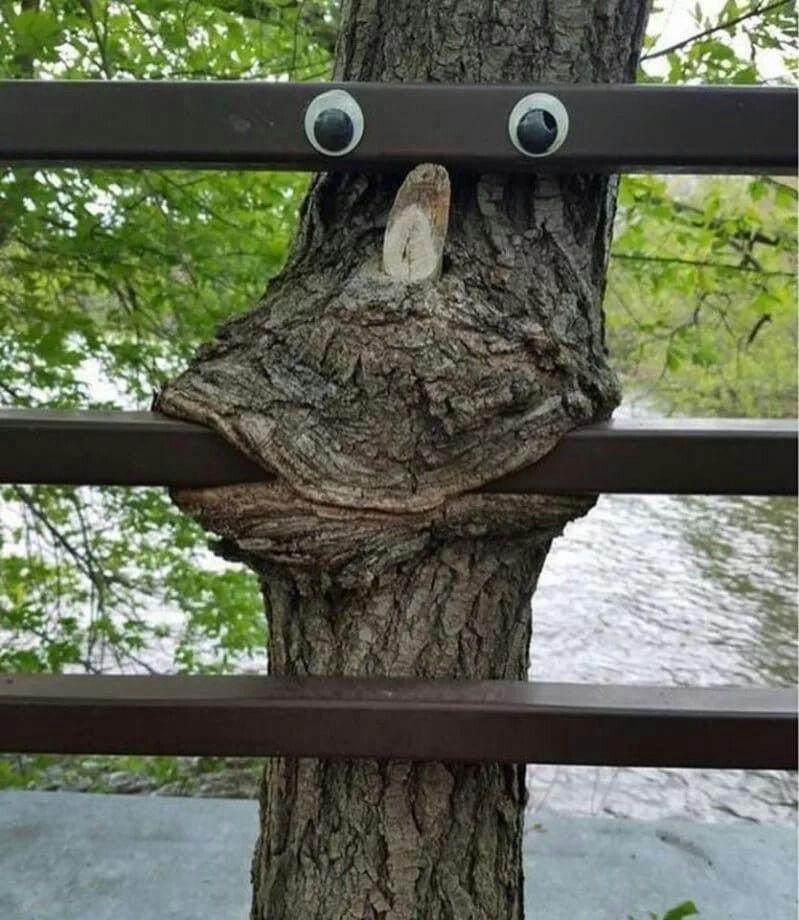 Заборы смешные картинки