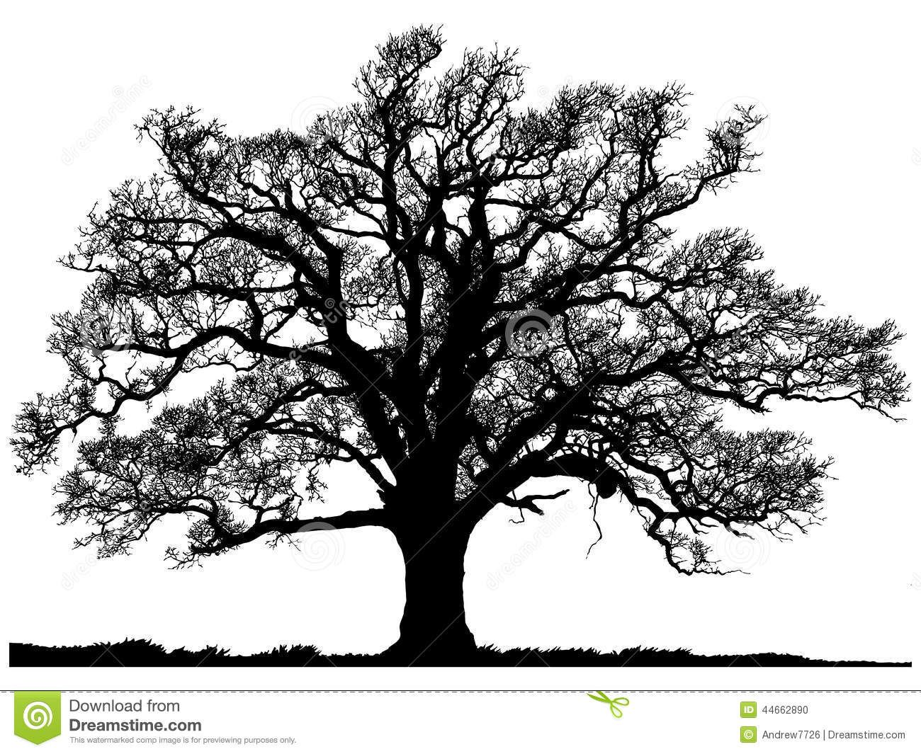 Silhouette Oak Tree Isolated White Background 44662890 Jpg 1300 1065 Live Oak Tree Tattoo Oak Tree Silhouette Oak Tree Tattoo