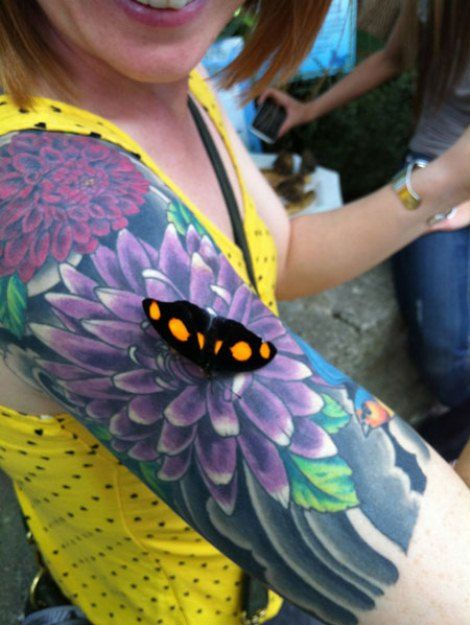 Tattoo Tricking A Butterfly