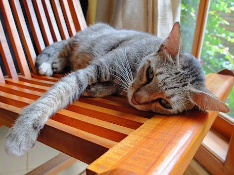 How to Treat Bilious Vomiting Syndrome in Cats | Cats | Cats
