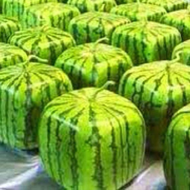 Best 25 square watermelon ideas on pinterest watermelon - Square watermelons how and why ...