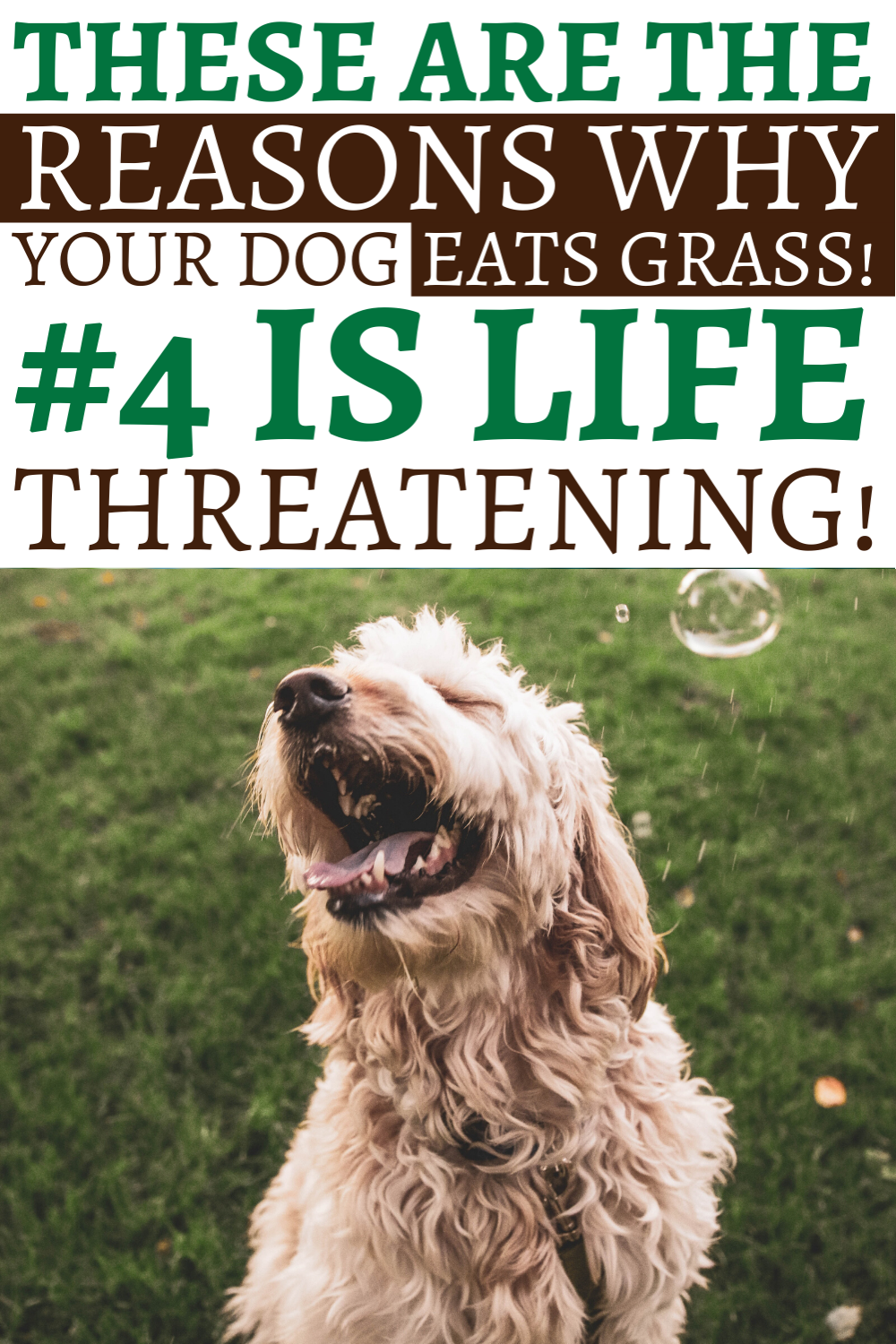 14+ Why do dogs eat their throw up ideas