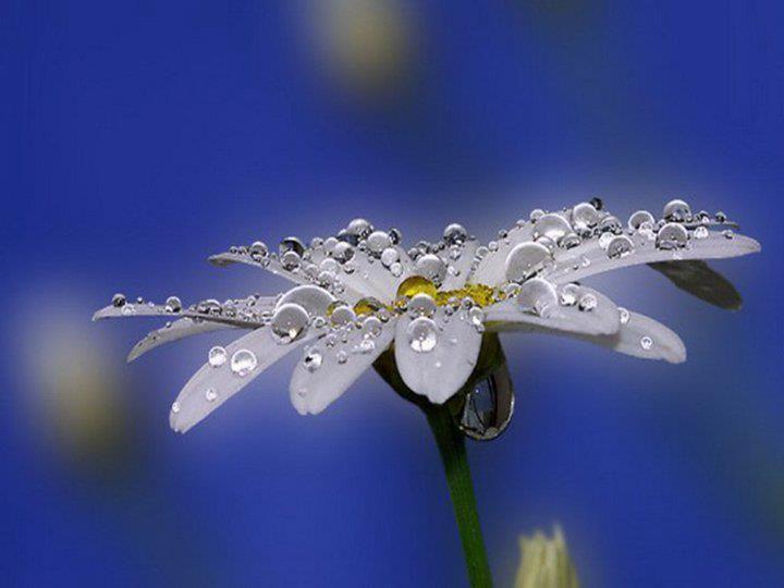 Beautiful!  Daisies are my very favorite flower!!!!