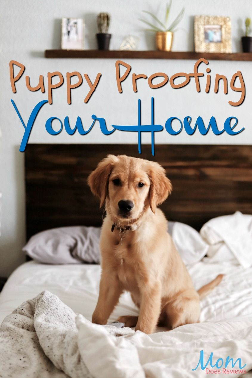 Puppy Proofing Your Home Inside And Out Puppies Training Your