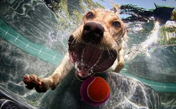 Underwater dog pic, no wonder he is called a BIG MOUTH hahahaha see what i did there