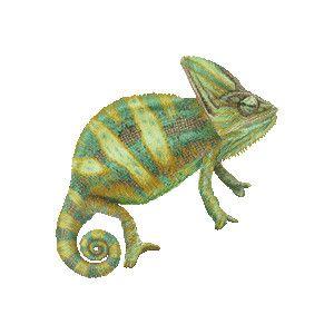 chameleon art | veiled chameleon clipart graphics (free clip art
