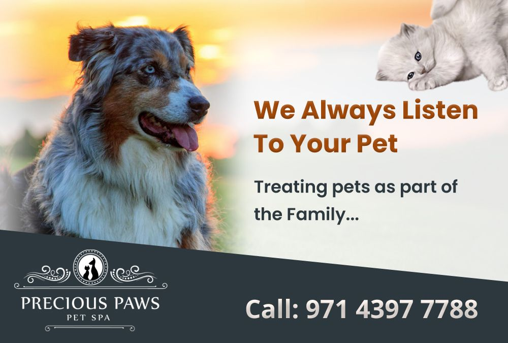 Precious Paws Pet Spa Is The Best Leading Pet Grooming In Dubai You Can Check Here Different Packages Pet Grooming For Your Cat A Pet Spa Online Pet Store Paw