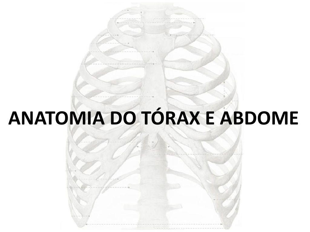 m u00e1s de 25 ideas incre u00edbles sobre anatomia del torax en