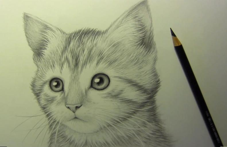Come Disegnare Un Bellissimo Gatto A Matita Video Tutorial Arte Del Gatto Disegnare Animali Disegni