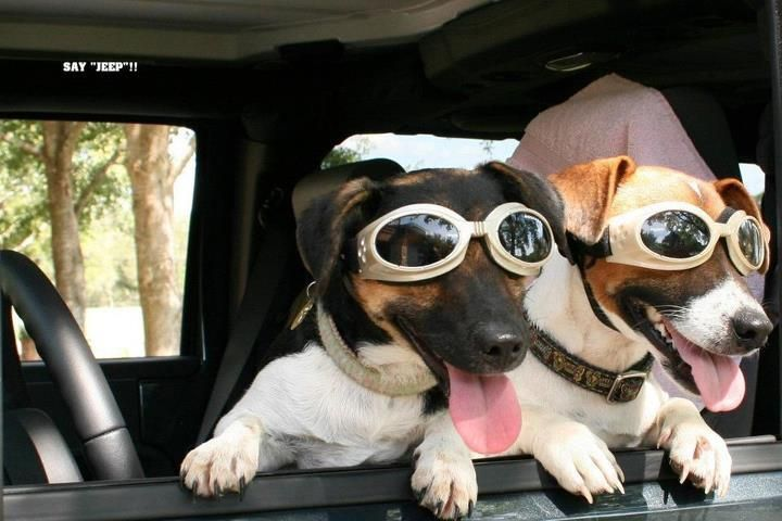 Glamour canino!