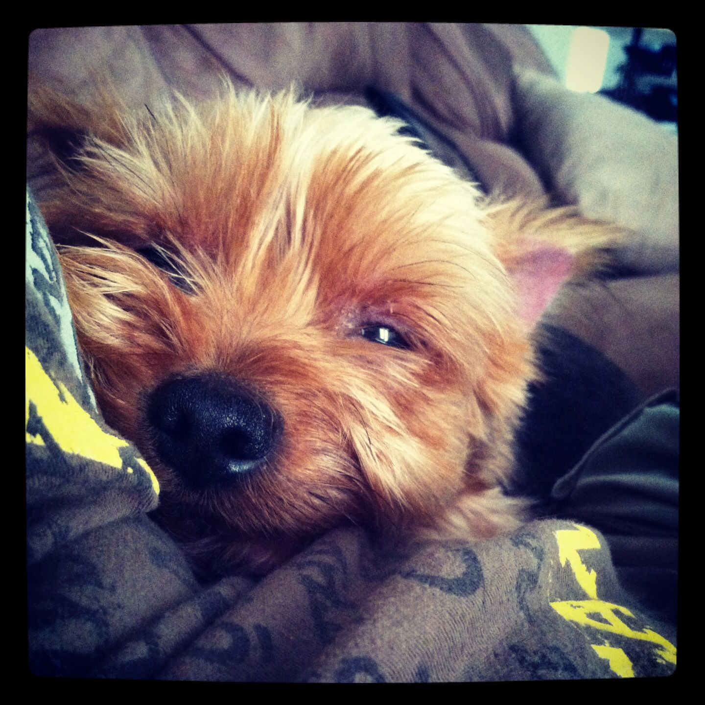 Happy Animals. My yorkie, Andre. He looks like a little chipmunk.
