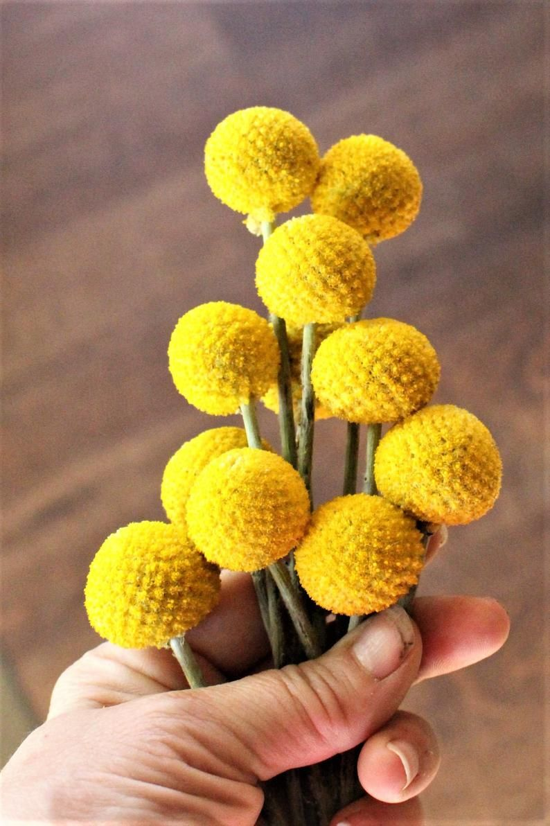 Craspedia billy balls google search yellow wedding