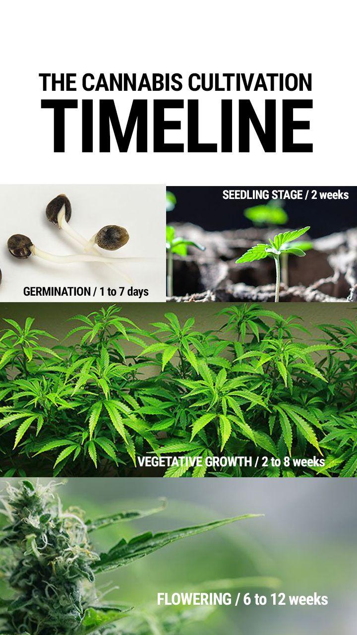 Antes de poner en marcha tu plantación de marihuana, necesitas ...