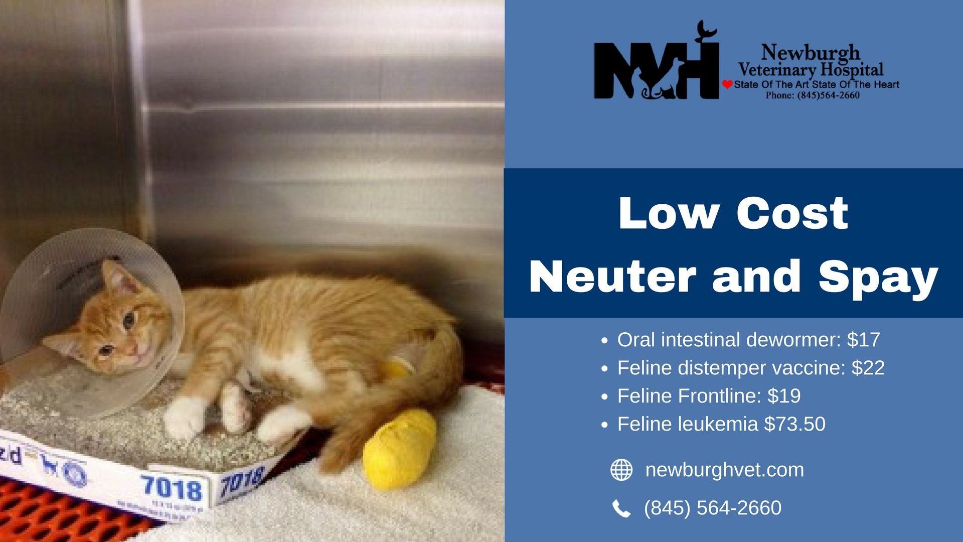 Newburgh Veterinary Hospital provides best quality and low
