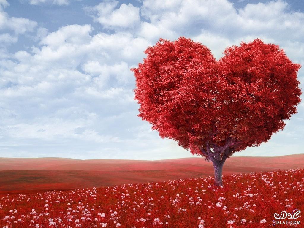 العاطفة أو العطف من الامور التي تؤثر كثيرا بي وبحياتي Love Wallpaper Love Images Heart Tree