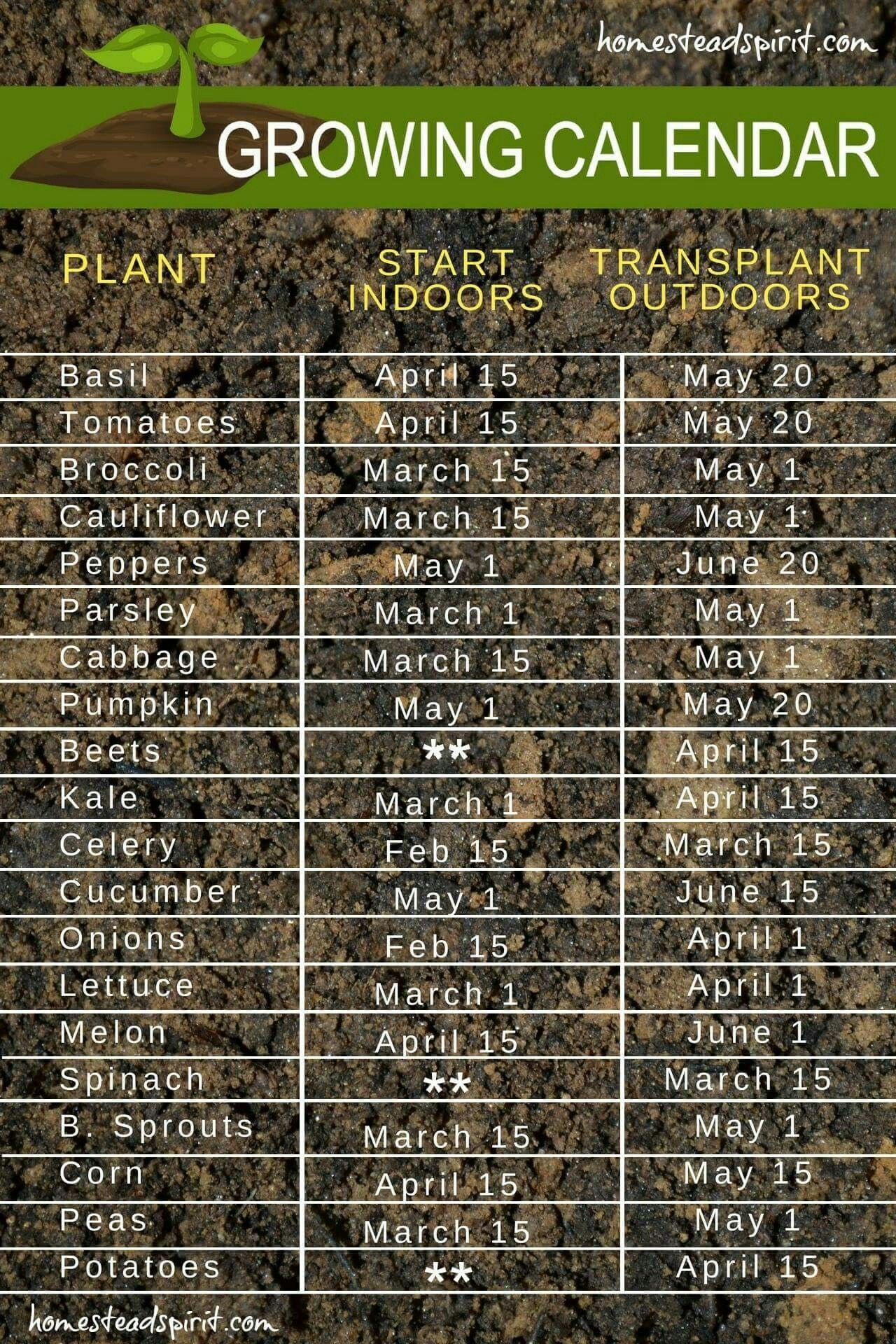 The times you should start your garden!   The Wonders of Plants ...
