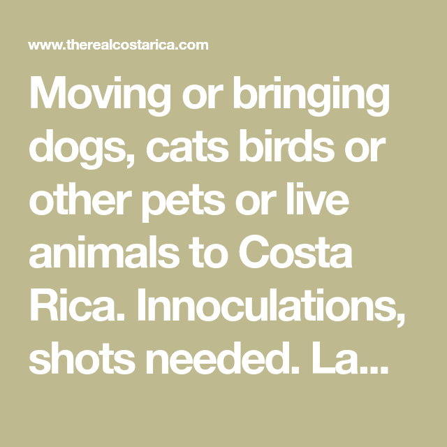 Moving Or Bringing Dogs Cats Birds Or Other Pets Or Live Animals To Costa Rica Innoculations Shots Needed Law Regarding Importing Ani Pets Animals Live Animals