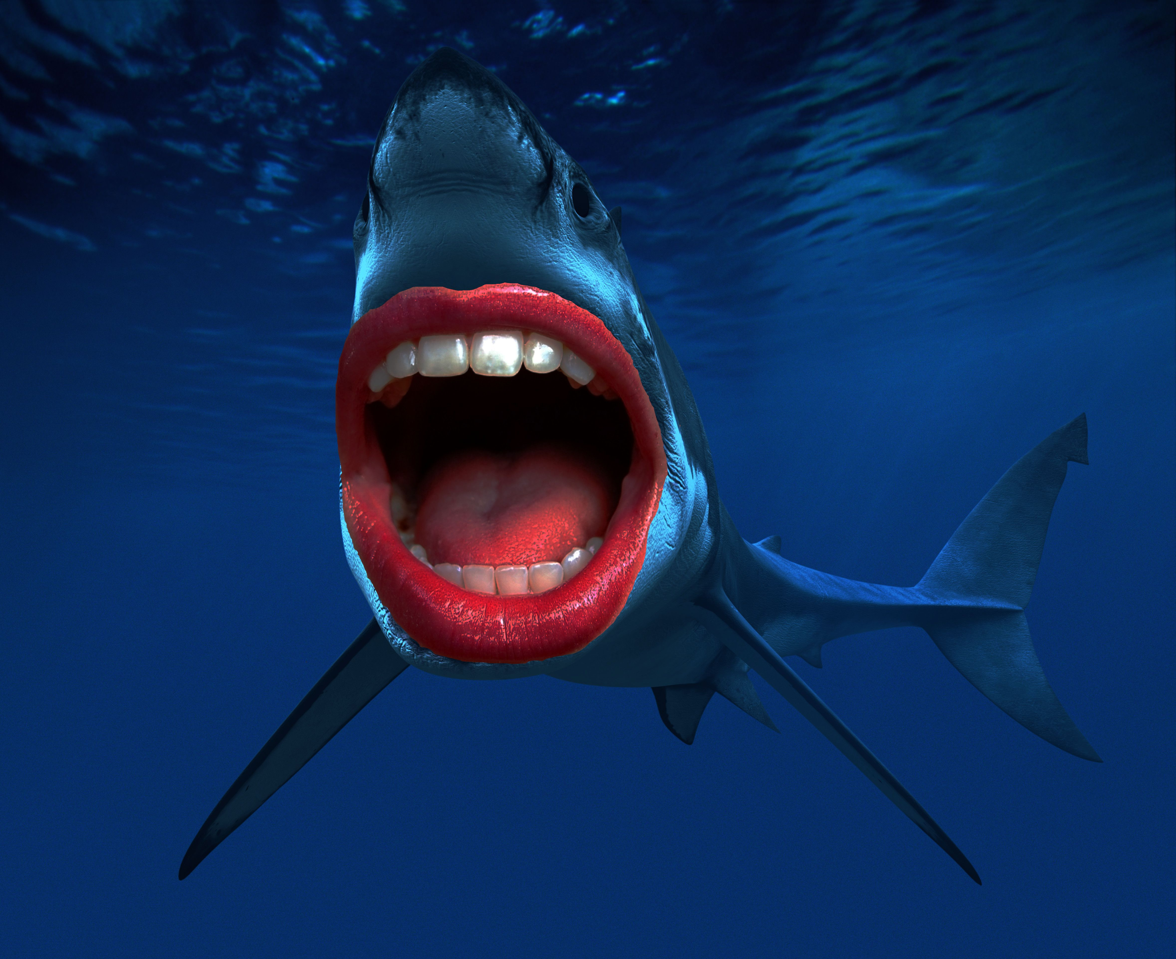 качества картинки рыба с открытым ртом камень